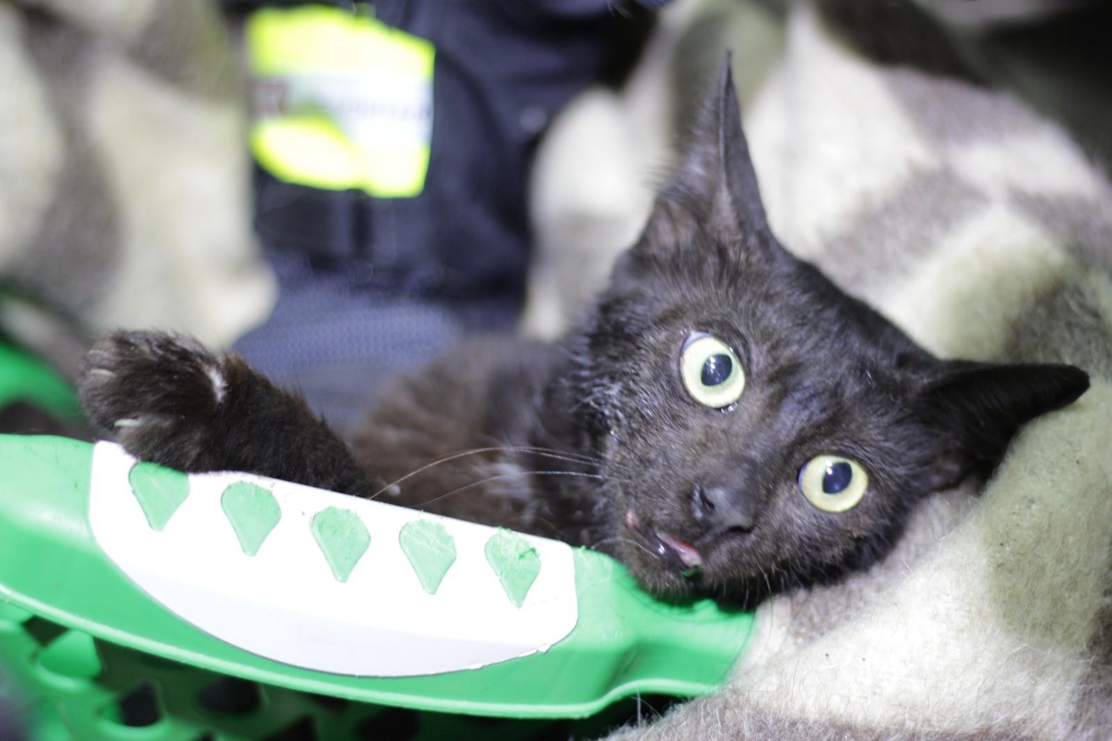 Kavanozlu kedi kurtarıldı