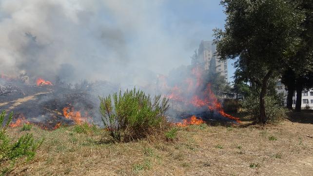 Marmara Adası'nda orman yangını: Belediye Başkanı destek istedi
