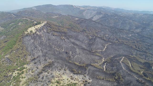 Bakan Pakdemirli: Yangın kontrol altında